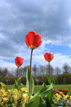 Flowers Schloss Schwerin