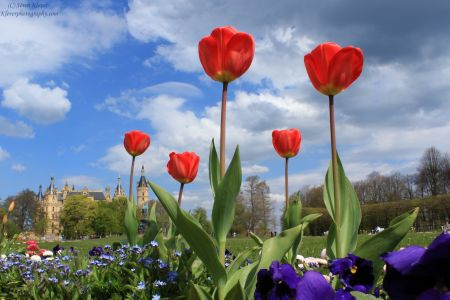 Flowers With Schloss Schwerin In Background V2