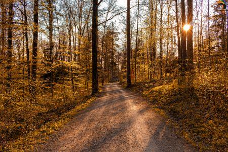 Forest Sunrise 2