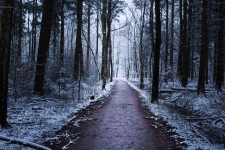Winter Road V2