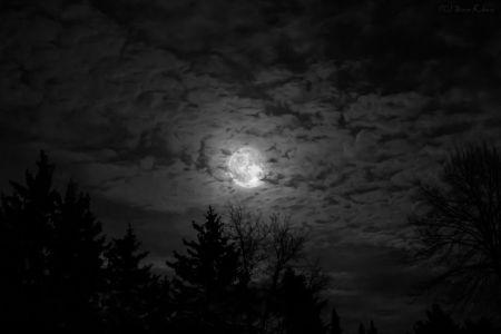 Moonlight V2